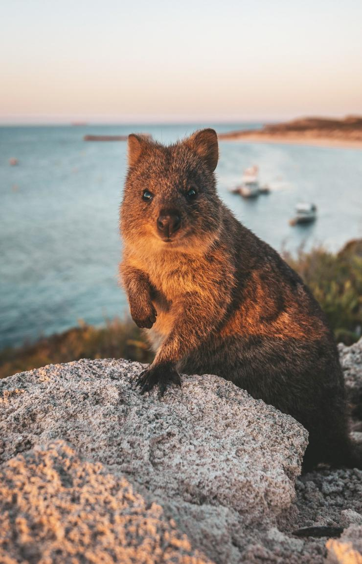 Wombat © Max Muench