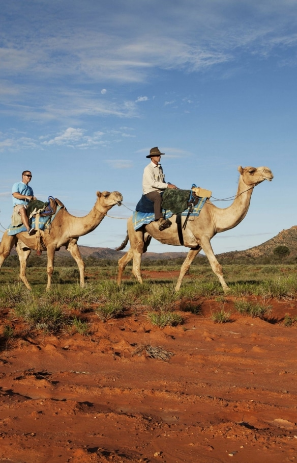 Kameltour, Red Centre, Northern Territory © Tourismus NT