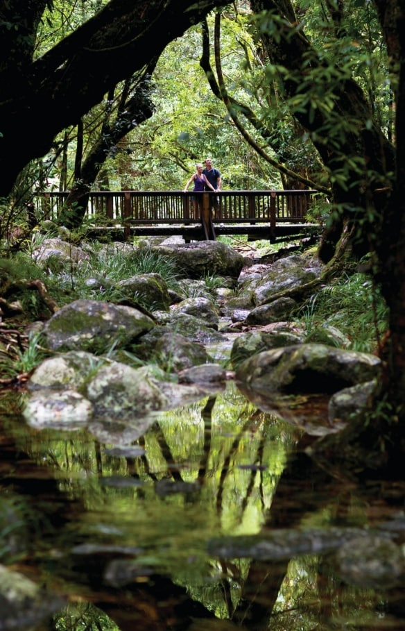 Rainforest Creek, Cape Tribulation, Cairns, Queensland © Tourism and Events Queensland