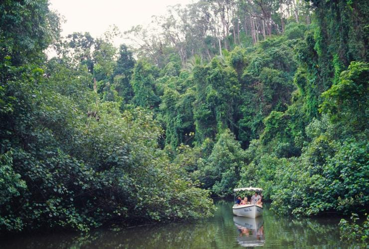 Daintree River Electric Boat Cruises, Daintree National Park, Queensland © Tourism Australia