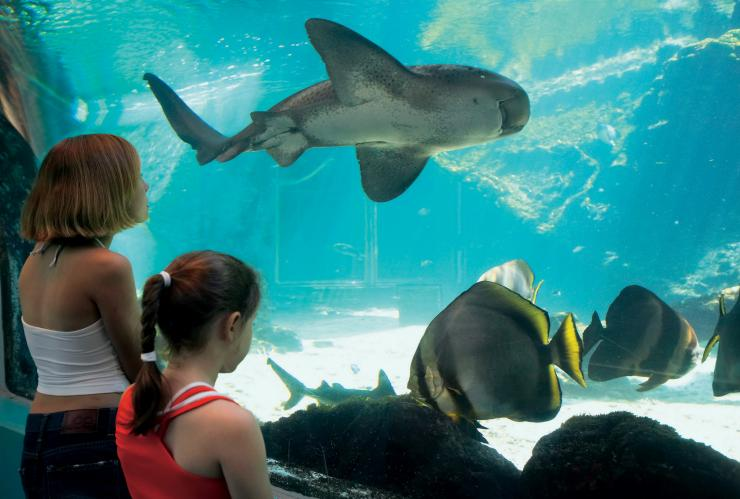 Reef HQ, Townsville Aquarium, Townsville, Queensland © Tourism and Events Queensland