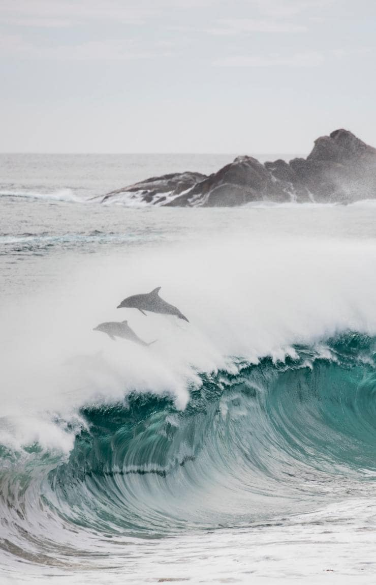 Cape to Cape Track, Margaret River, Westaustralien © Elements Margaret River