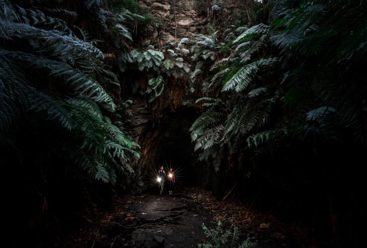 Glow Worm Tunnel, Wollemi National Park, New South Wales © Tourism Australia