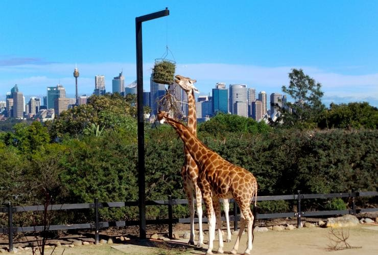 Taronga Zoo Sydney, Sydney, New South Wales © Tourism Australia