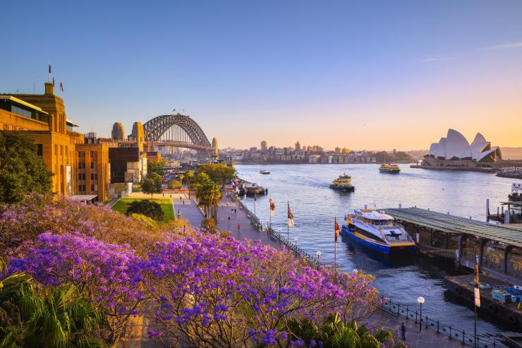 Jacarandas und Sydney Harbour bei Sonnenuntergang, Sydney, New South Wales © Destination NSW