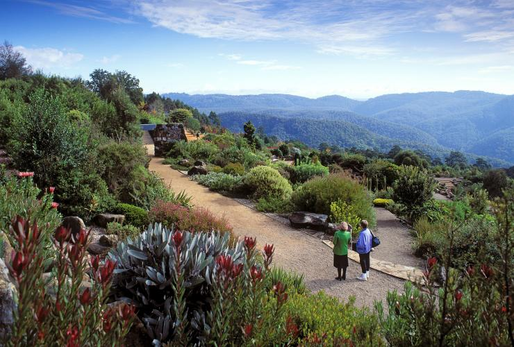 Mt Tomah Botanic Gardens, Blue Mountains, New South Wales © Tourism Australia