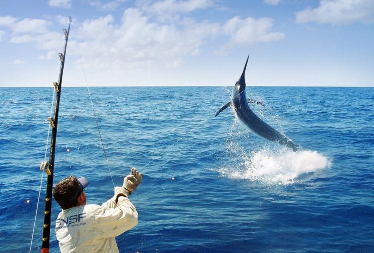 Marlin-Angeln, Port Douglas, Queensland © Far North Sports Fishing