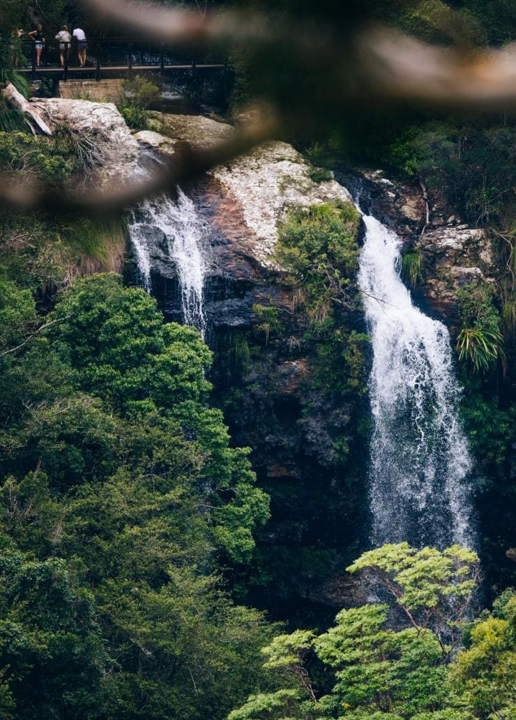 Wasserfall am Warrie Circuit im Springbrook National Park, Queensland © Destination Gold Coast