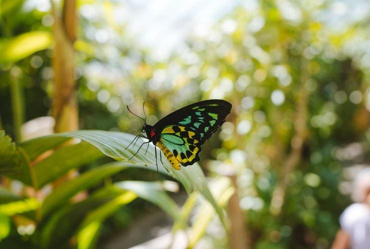 Australian Butterfly Sanctuary, Kuranda, Queensland © Tourism Australia