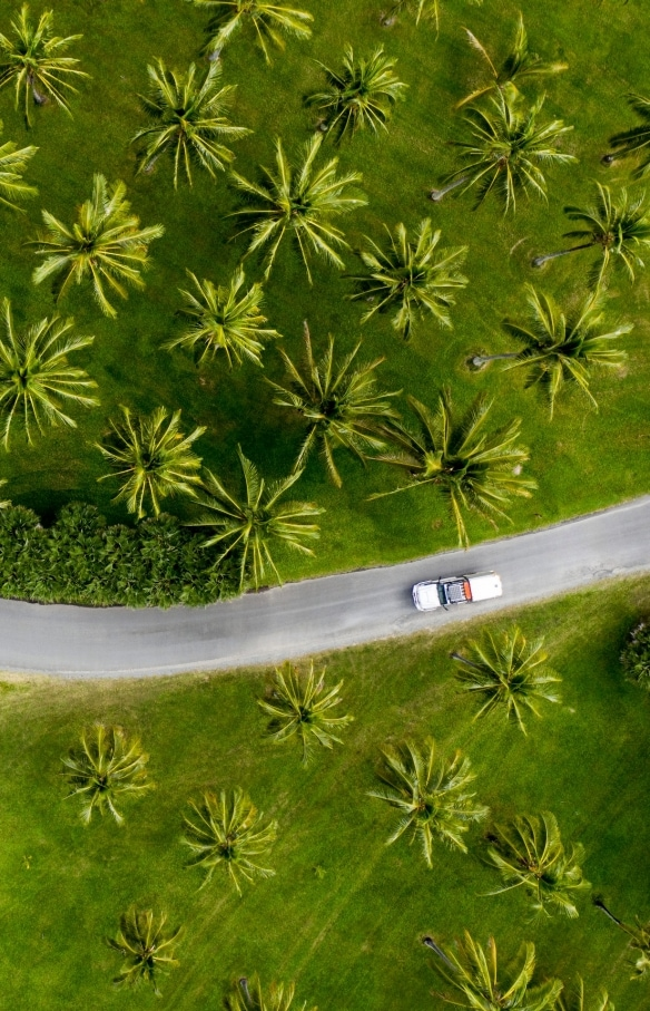 Aerial of car driving through palm trees in Tropical North Queensland © Tourism and Events Queensland / Sean Scott.