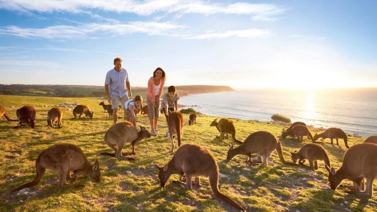 Image result for kangaroo island australia