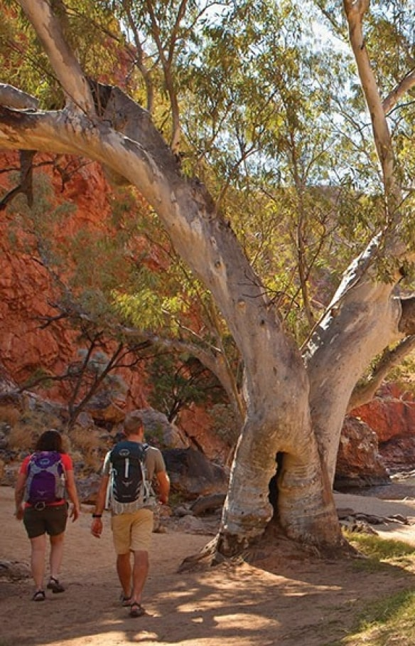 Ormiston Gorge, West MacDonnell Ranges, NT © Tourism NT