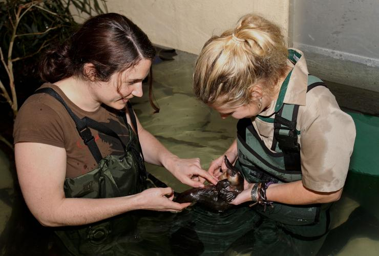 Wade with platypus experience, Healesville Sanctuary, Healesville, VIC © Healesville Sanctuary