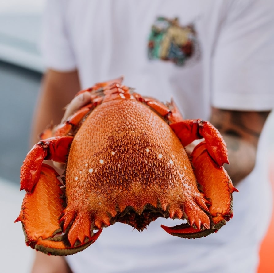 Man holding a freshly-caught spanner crab in Mooloolaba © Tourism and Events Queensland