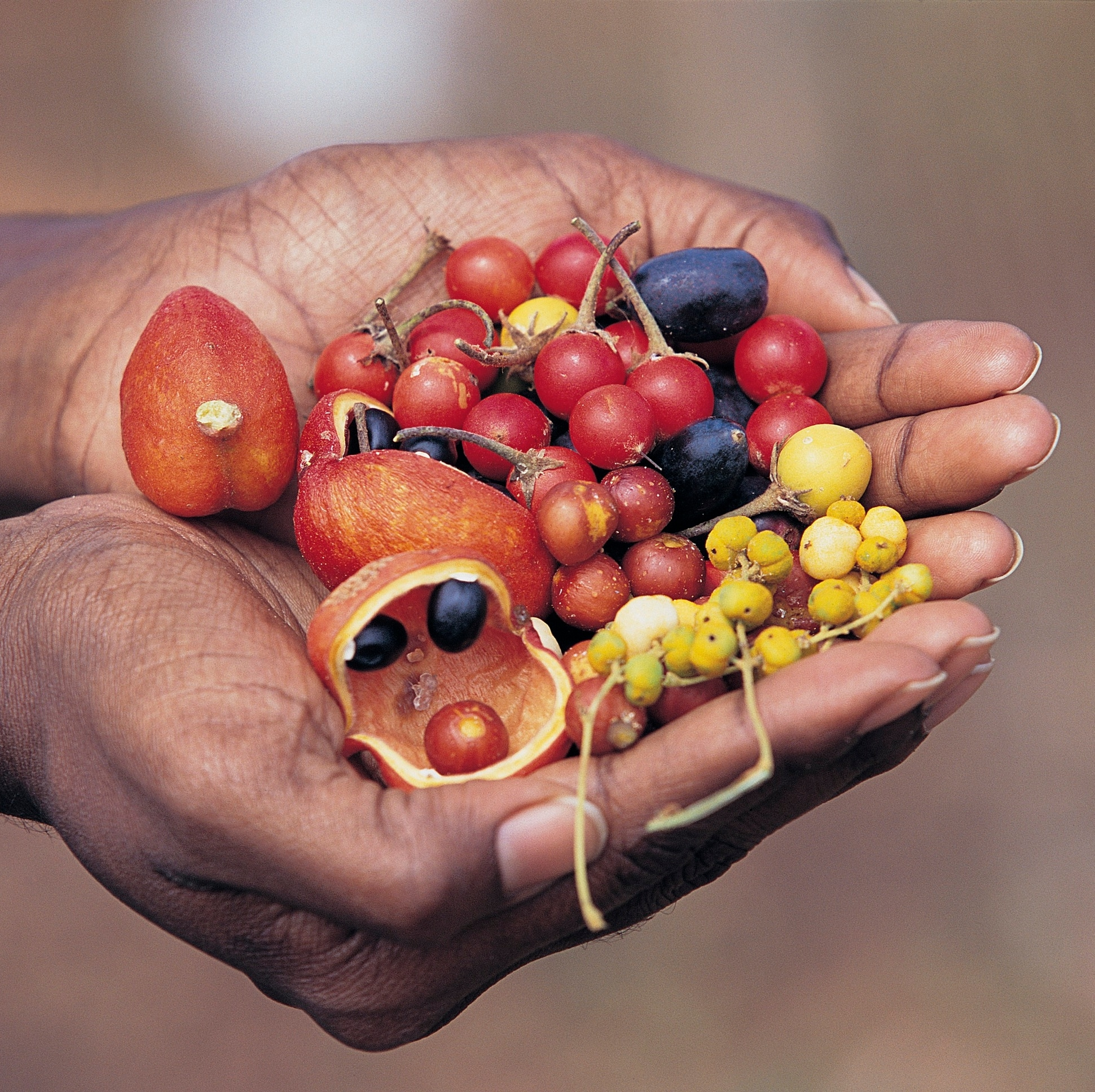 Hand holding native Australian bush tucker © Tourism Australia