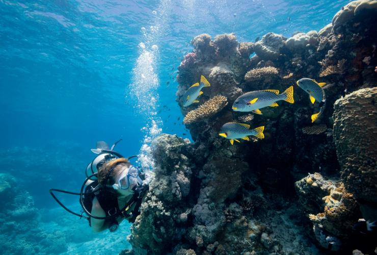 Snorkelling, Lizard Island, Whitsunday Islands, Great Barrier Reef, QLD © Tourism and Events Queensland/Darren Jew