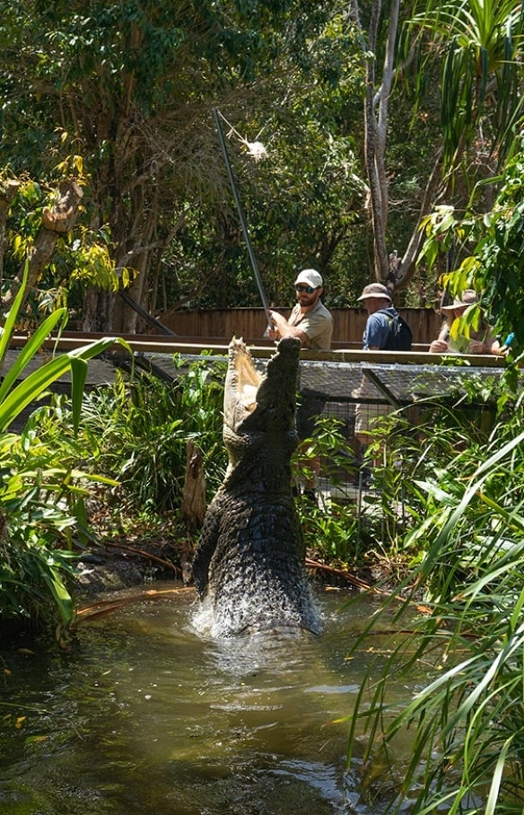 Crocodile jumps out of the water at Hartley's Creek Crocodile Adventures in Queensland © Tourism Australia