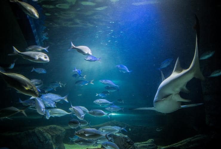Sea Life Sydney Aquarium, Sydney, NSW © Tourism Australia