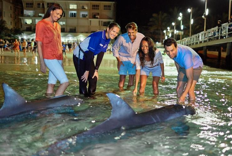 Dolphin feeding, Tangalooma Island Resort, Moreton Island, Queensland © Tourism and Events Queensland