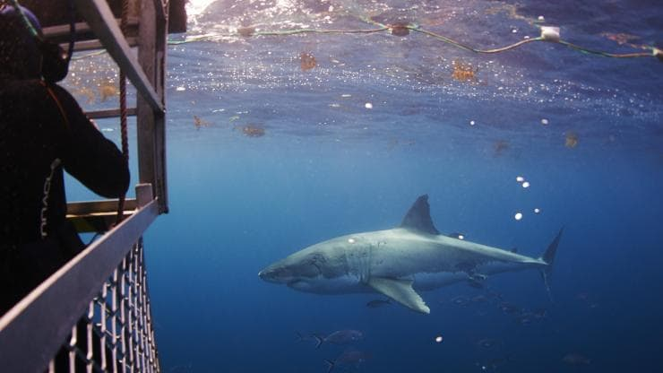 Shark cage diving, Adventure Bay Charters, Port Lincoln, SA © Adventure Bay Charters
