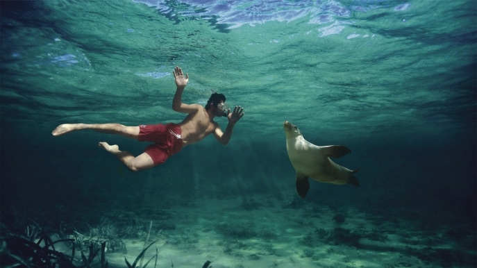 Swimming with the Sea Lions, Baird Bay, SA © South Australian Tourism Commission
