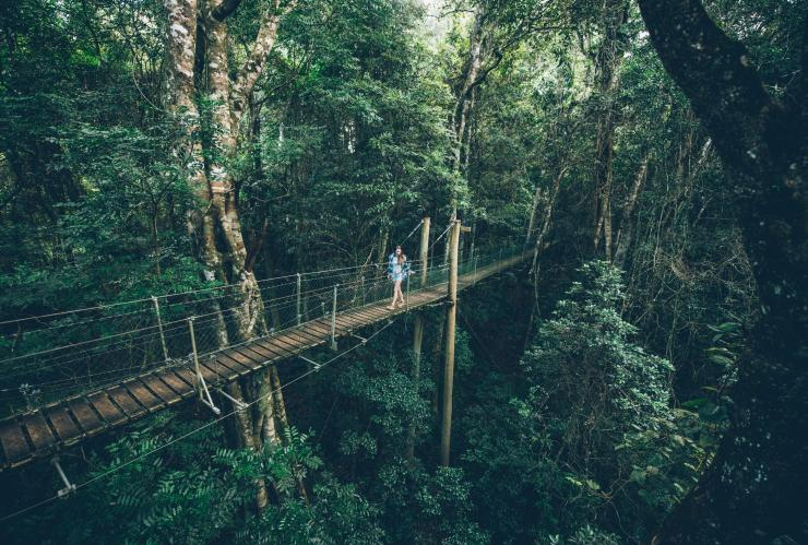 Person walking through O'Reilly's Rainforest Retreat © Tourism and Events Queensland