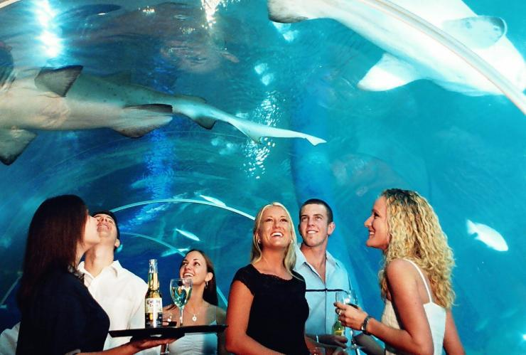 Sea Life Sunshine Coast, Mooloolaba, QLD © Tourism and Events Queensland