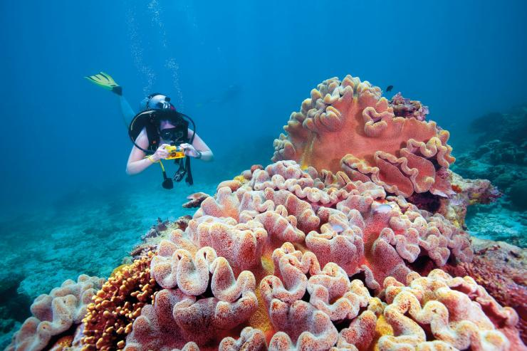 Scuba Diving in the Fitzroy Reef Lagoon at the Great Barrier Reef © Tourism and Events Queensland