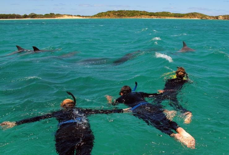 Swimming with Dolphins, Rockingham, WA © Tourism Australia