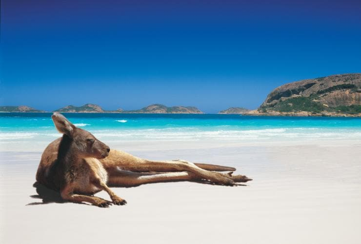 Kangaroo, Lucky Bay, Cape Le Grand National Park, Esperance, WA © Tourism Australia