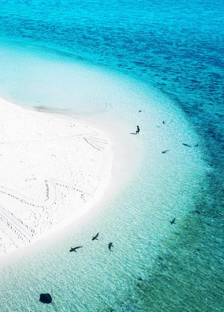 Heron Island, Great Barrier Reef, QLD © Paul Giggle, Tourism and Events Queensland