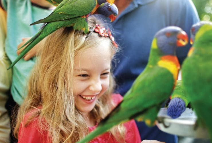 Currumbin Wildlife Sanctuary, Gold Coast, QLD © Tourism and Events Queensland