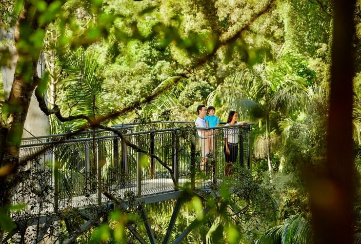 Family views the rainforest from a skywalk platform at Tamborine Rainforest Skywalk on the Gold Coast © Tourism Australia