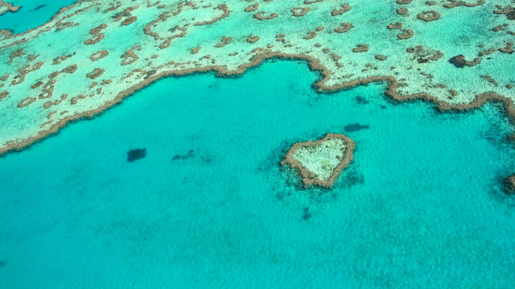 Heart Reef, Great Barrier Reef, QLD. © Tourism and Events Queensland