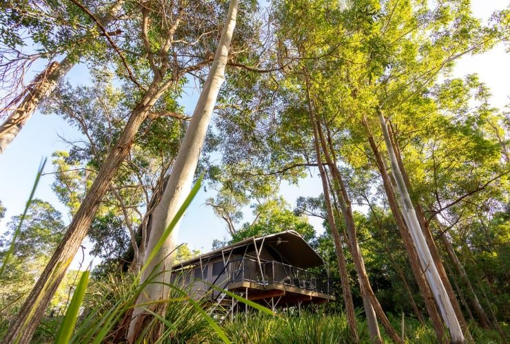Sirromet vineyards, Granite Belt, QLD © Sirromet Vineyards