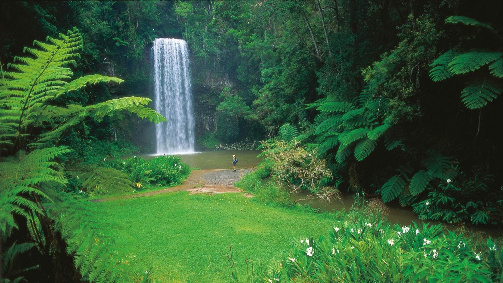 Millaa Millaa Falls, Tablelands, QLD © Tourism and Events Queensland
