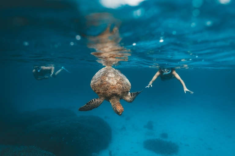 Snorkellers swim alongside a turtle near Heron Island, Queensland © James Vodicka/Tourism Australia