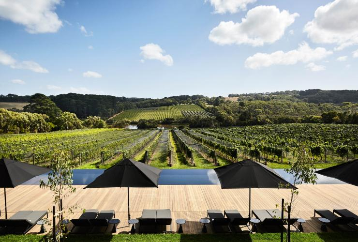A rolling green vineyard with grapevines at Jackalope Hotel on the Mornington Peninsula, Victoria ©  Jackalope Hotel