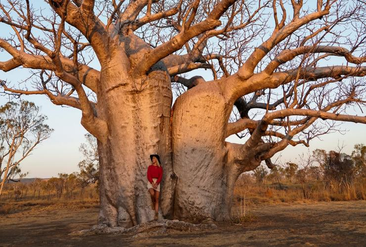 Woman standing under Boab Tree in Derby © Tourism Australia