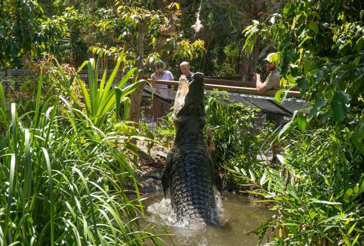 Hartley's Crocodile Adventures, Wangetti, QLD © Tourism and Events Queensland