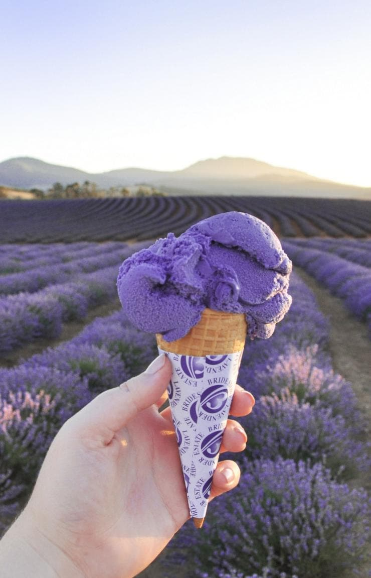 Bridestowe Lavender Estate, Nabowla, TAS © Bridestowe Lavender Estate