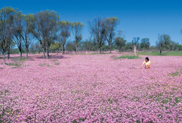Wildflowers in bloom, Turquoise Coast, WA © Tourism Western Australia