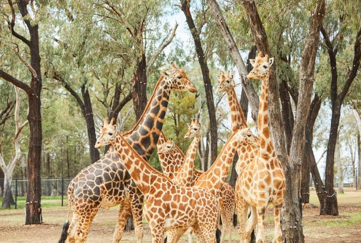 Taronga Western Plains Zoo, Dubbo, NSW © Destination NSW
