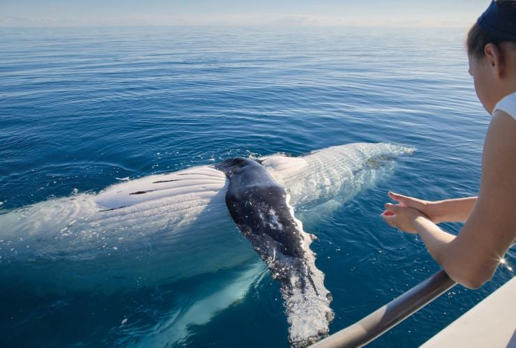 Whale watching, Hervey Bay, Fraser Coast, QLD © Tourism and Events Queensland