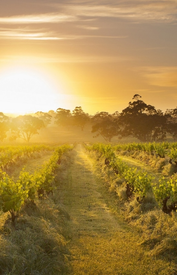 Henschke, Mount Edelstone Vineyard, Barossa Valley, South Australia © Henschke and Co.