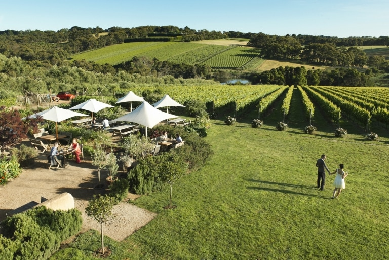 Montalto Vineyard & Olive Grove, Red Hill South, Victoria © Robyn Lea, Brand Victoria