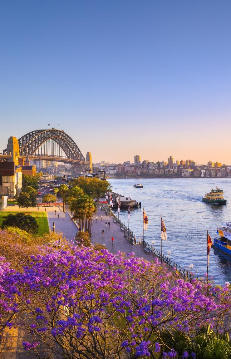 Jacarandas and Sydney Harbour at sunset, Sydney, NSW © Destination NSW