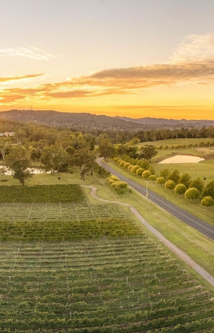 Centennial Vineyards, Bowral, Southern Highlands, NSW © Destination NSW