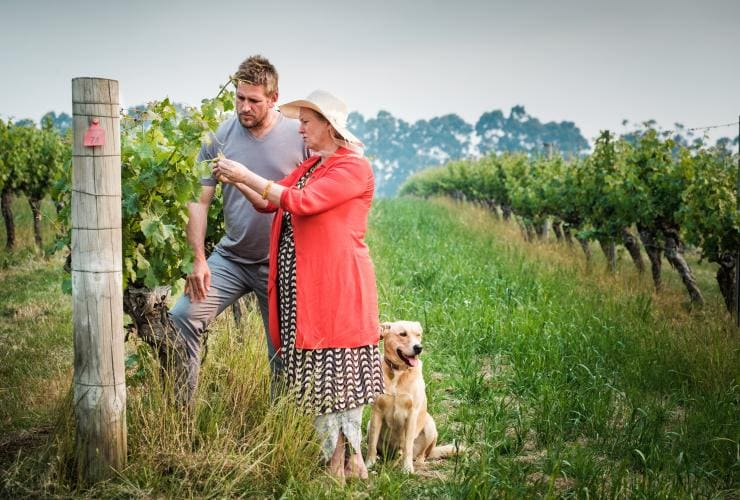 Curtis Stone, Cullen Wines, WA Ⓒ Insight Photography
