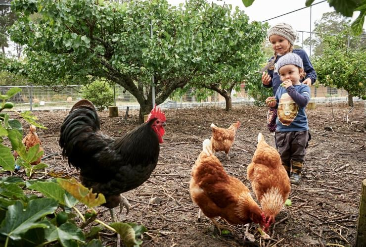 Children feeding chickens at Burnside Organic Farm © Burnside Organic Farm/Frances Andrijich